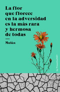 La flor que florece en la adversidad