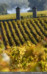 Acclaimed names for some of Bordeaux's best Cab-based blends come from the villages of St. Estephe, Pauillac, St. Julien and Margaux. For more affordable left bank wines look for labels with the villages of Listrac, Moulis and Haut-Medoc.