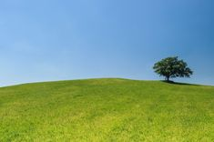 #eco #green #hill #lonely #meadow #tree #turf