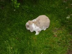 'Hmm...? Where to start nibbling?' <3 Don't forget that grass is a staple of the rabbit's diet!