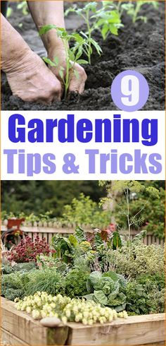 9 Gardening Tips and Tricks.  Great information on planting and maintaining a garden.