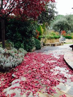 Paseo por el jardin en otoño.