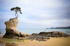 Road Trip New Zealand: South Island | TerraDrift