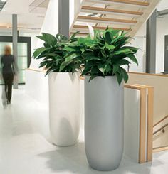 Green Design offer competitive price to hire plants in Sydney. Contact us on 02 9410 0204 for an exact quote today! Indoor Planters, Flower Planters, House Plants Decor, Plant Decor, Large Flower Arrangements, Corporate Flowers, Brick Garden, Fiberglass Planters, Floor Plants