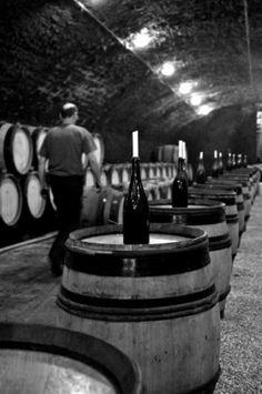wine cellar, Burgandy, France