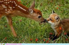 Interspecies Love: Making New Friends.