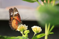 Annual Butterfly Show on campus