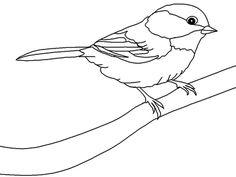 Desenhos para Colorir: Pássaros