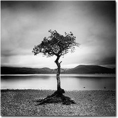 Trademark Art Scotland, Milarrochy Tree Canvas Art by Nina Papoirek, Size: 24 x 24, Black