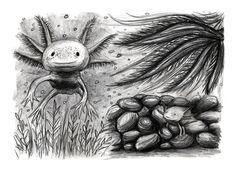 Axolotl Print // KestleLane on Storenvy