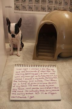 Hahaha ok that's one of the funniest ones I've seen. I love dog shaming..