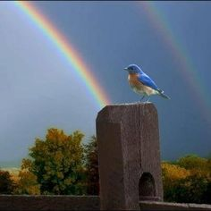 If pretty little bluebirds fly beyond the rainbow, why oh why can't I?