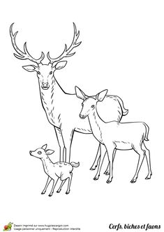 Dessin à colorier Cerf, biche et faon en famille - Hugolescargot.com