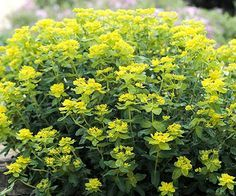 Tough Perennials that Grow in Dry Shade