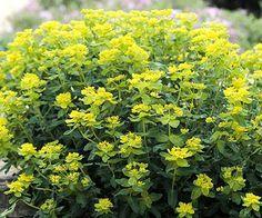Tough Perennials that Grow in Dry Shade