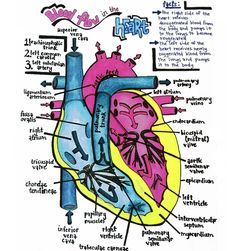 Blood Flow in the Heart: Right Atrium —> Right Ventricle —> Pulmonary Artery —> Lungs —> Left Atrium —> Left Ventricle —> Aorta —> Body Memory Tip: deoxygenate blood is received on the right-side of the heart, and oxygenated blood leaves from the left-side of the heart.