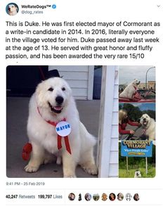 17 Of The Best Dog Posts The Internet Gave Us This Week - And lastly, the upstanding Duke, Mayor of Cormorant, Minnesota, sadly crossed over the Rainbow Brid - Cute Little Animals, Cute Funny Animals, Funny Cute, Cute Puppies, Cute Dogs, Dog Rates, We Rate Dogs, Funny Animal Pictures, Animal Memes