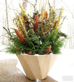 Holiday container gardens are the perfect solution for adding color and interest to your entryway, deck, patio, or balcony during the snowy season if you live in a cold-winter climate. Check out our beautiful holiday containe/
