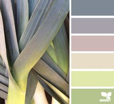color leek