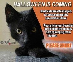Please choose to not use black cats in any Halloween decorations, no matter how cute the photo or even if it's a cartoon, especially if you have children.