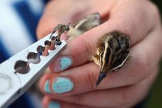 Getty Images: Birds Are Recorded At One Of The Worlds Largest Ringing Stations