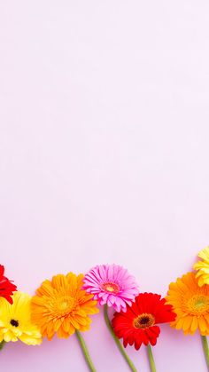 iPhone-FloralFooter.jpg 901×1,600 pixels