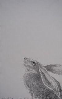 Moonstruck Hare, by Jackie Morris, Welsh illustrator. Rabbit Book, Rabbit Art, Hare Illustration, Morris, Bunny Art, Art For Art Sake, Wildlife Art, Pet Birds, Photos