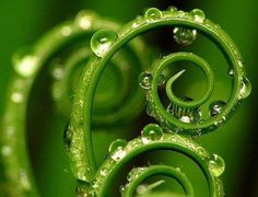green plant swirls with raindrops- natural forms :)