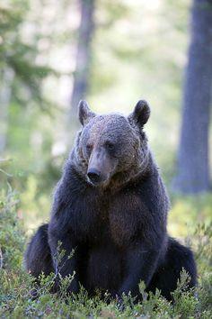 bear - null