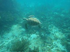 Snorkel Expedition check:)