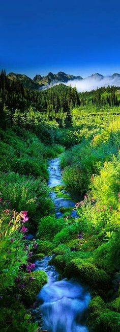 Stunning nature photo with stream running through green valley at Mount Rainier National Park, Washington, USA. All Nature, Amazing Nature, Places To Travel, Places To See, Beautiful World, Beautiful Places, Beautiful Scenery, Landscape Photography, Nature Photography