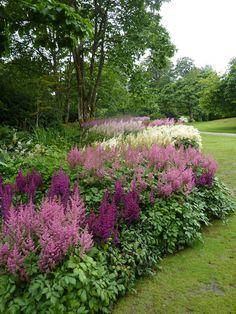 Garden with creative edges, lovely astilbe
