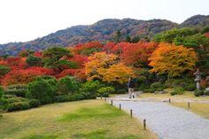 "A Kyotoite recommends ""The Best Touring Route of Saga and Arashiyama"" | MATCHA - JAPAN TRAVEL WEB MAGAZINE"