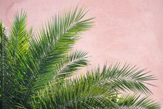 Plants on Pink - Palmes