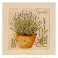 Herbes de Provence, Lavander
