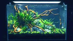 Co2 Aquarium, Aquarium Design, Aquarium Fish Tank, Planted Aquarium, Fish Tank Supplies, Pet Supplies, Glass Fish Tanks, Pet Paradise, Aquarium Landscape