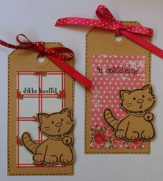 Marjoleine's blog: Nog meer katjes