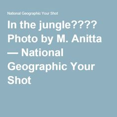 In the jungle???? Photo by M. Anitta — National Geographic Your Shot