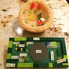 Plant cell model with key lego plant cell model pinterest cell 3d plant animal cell models publicscrutiny