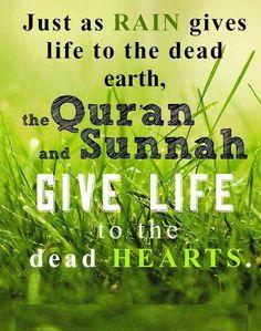 The Qur'an & sunnah revive dead hearts! Alhamdulillah