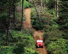 rainforest tour - lanai hawaii