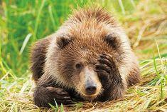 Grizzly bear cub | Funny | Pinterest