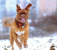 Discover 17 dog photography tips for gorgeous canine photos. Instantly improve your dog photography to the next level with these practical tips. Pet Dogs, Dogs And Puppies, Aussie Puppies, Havanese Dogs, Dog Training Tips, Training Kit, Training Classes, Dog Photography, Dog Quotes