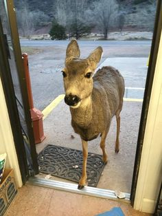 Deer Family Makes Surprise Visit To Colorado General Store - The Dodo
