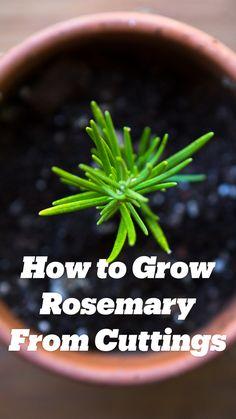 Regrow Vegetables, Container Gardening Vegetables, Growing Vegetables, Home Vegetable Garden, Herb Garden, Plant Cuttings, Propagation, Organic Gardening Tips, Gardening Hacks