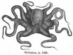 https://nevalalee.files.wordpress.com/2011/09/octopus-engraving.jpg
