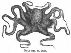 https://nevalalee.files.wordpress.com/2011/09/octopus-engraving.jpg