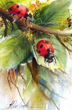 Fábio Cembranelli - A Painter& Diary: Lady Bug-Watercolor / Ladybug-Watercolor - art Painting easy Painting ideas Painting water Painting tutorials Painting landscape Painting abstract Watercolor Painting Easy Watercolor, Watercolor Animals, Watercolor Flowers, Watercolour Butterfly, Painting & Drawing, Watercolor Paintings, Original Paintings, Watercolors, Water Drawing