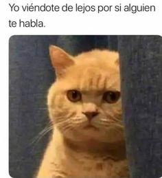 ideas funny cats memes humor kittens for 2019 Cute Funny Animals, Cute Baby Animals, Funny Cats, Cats Humor, Funny Cat Faces, Cute Kittens, Cats And Kittens, Cats Bus, Cute Cat Memes