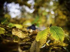 https://flic.kr/p/AC3phe   Autumn Colors   Farben im Herbst